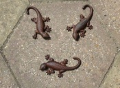 Set of Three Cast Iron Geckos