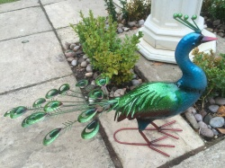 New* Exotic Large Vibrant Metal Peacock - Garden Ornament - Metal Animal Gift
