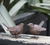 Pair of Wrens